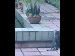 Котик ушел в плавание