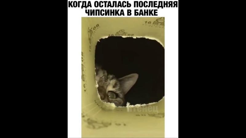 Смешные видео с животными Котики Подборка из соцсетей 2020 1
