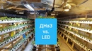 ДНаЗ 600w или LED 300w? Что лучше для теплиц, проверяем спектрометром