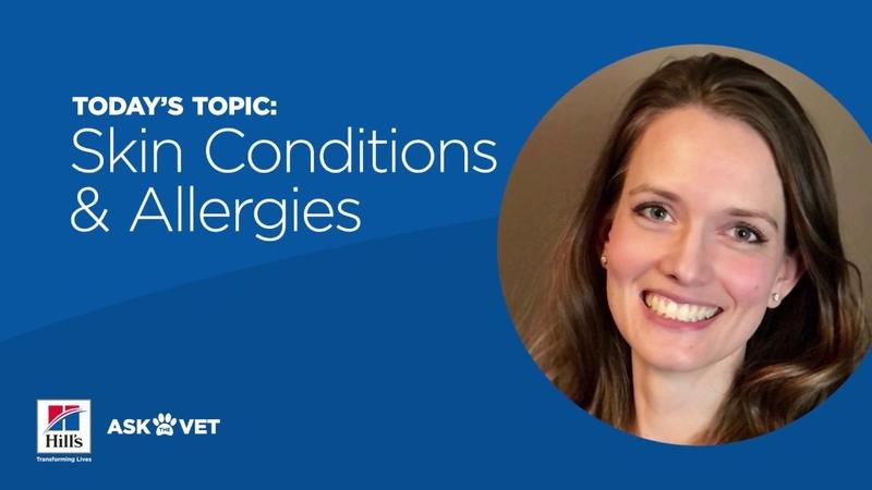 Аллергия домашних животных связана с кожными и ушными инфекциями Pet Allergies Tied to Skin Ear Infections