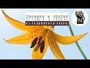 DIY. Как сделать пестик и тычинки для лилии. МК. How to make a pestle and stamens for lilies.