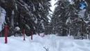 Сезон охоты №2 Охота на волка