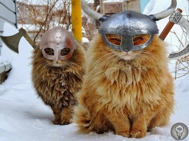 Какими были коты викингов