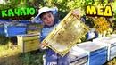 Качаю мед из улья распечатывания медовых сот какой звук при качке меда