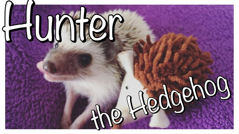 Things People Don't Tell You About Owning a Hedgehog