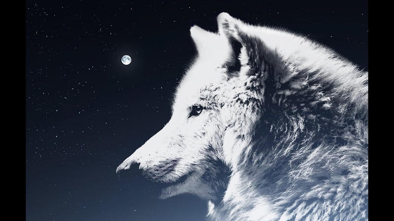 VOW Lonely Wolf song
