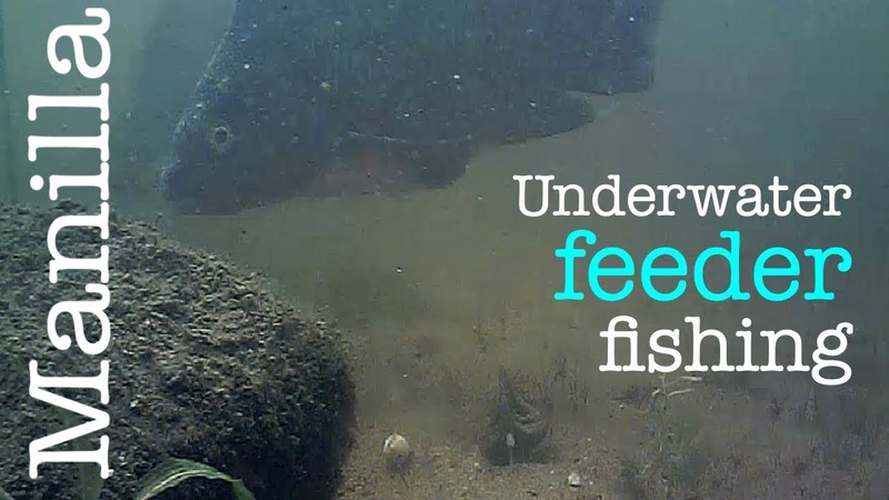 Feeder fishing with Manilla - Underwater footage - Breamtime S5 E1