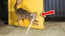 Defending a Wild Bird Nest from the Neighbor's Cats- Part 2