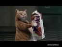 Yoki Juice commercial ads with cat.