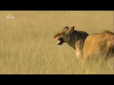 Nat Geo Wild: Смертоносная Африка. Калахари 2018
