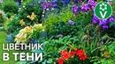 Что посадить в тени Самые эффектные растения