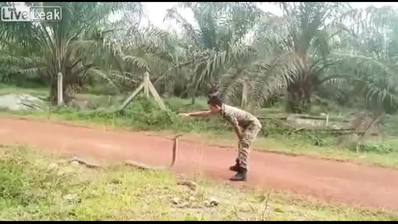 Королевская кобра и малайзийский солдат