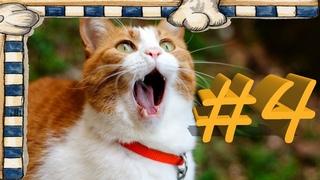 СМЕШНЫЕ КОТЫ Смешное видео про кошек, видео нарезка приколов 2021! выпуск #4