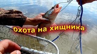 Рыбалка на реке Обь. Судак, щука, окунь.