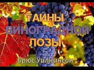 Б.УИЛКИНСОН - ТАЙНЫ ВИНОГРАДНОЙ ЛОЗЫ - 5 ЧАСТЬ