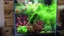 Akwarium roślinne kostka planted aquarium cube optiwhite Aquael Leddy Slim Advanced Soil Ada fish