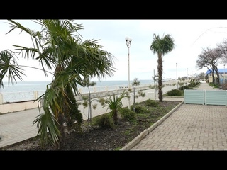 Пальмы на Азовском побережье