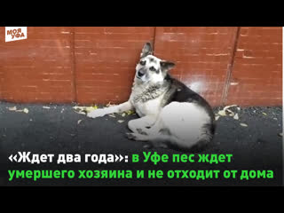 Ждет два года: в Уфе пес ждет умершего хозяина и не отходит от дома