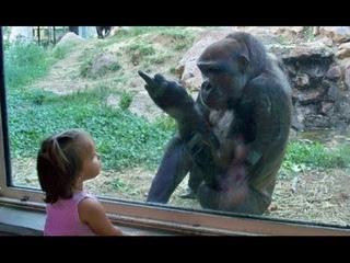 Les bébés drôles au zoo - Les enfants au zoo Nouvelle compilation