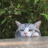 """id_15724 """"Я жарил рыбу-гриль на заднем дворе, краем глаза заметил соседского кота""""  #gif@bon"""