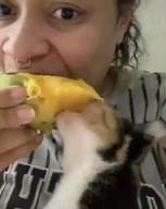 id_49829 Кот, который без ума от манго 😊 Что самое необычное любят ваши домашние питомцы?  #gif@bon