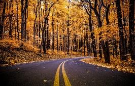 """За что вы любите осень? Блиц-опрос от """"СН"""""""