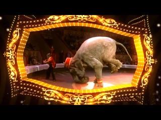 Видео от Цирк Чинизелли