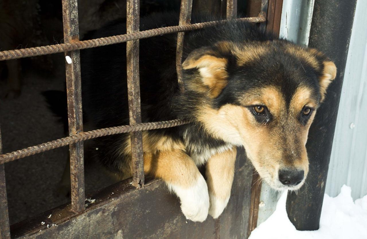 В Югре в 2020 году отловлено почти 300 собак