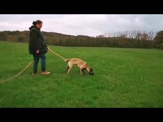 Eisenwille IZABEL, 8 мес., Германия, следовая работа