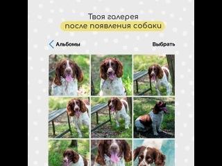 Как изменилась галерея фото, когда завел собаку :)