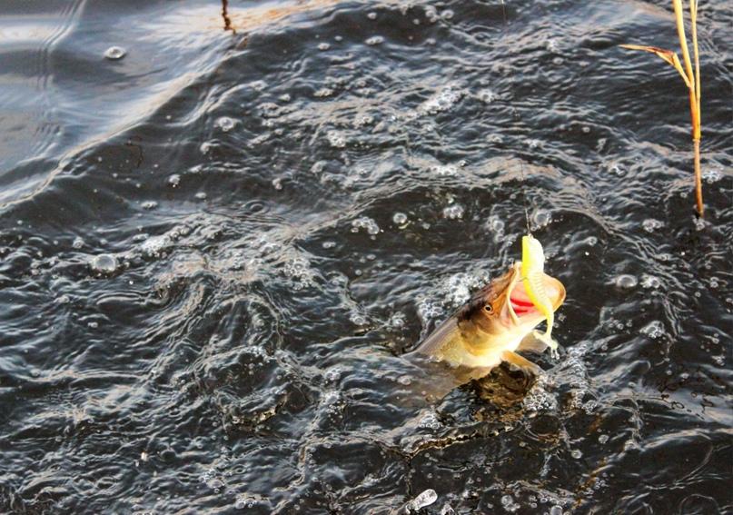 Как поймать хищника на мелководье, изображение №3
