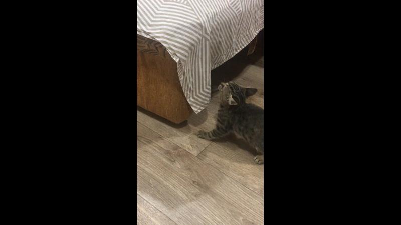 Видео от Марины Замановой