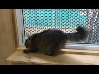 Снежинский БФ помощи бездомным животным kullanıcısından video