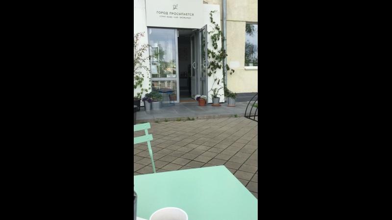 Видео от Бароша путь домой Собаки мечты