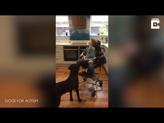 [Caters Clips] Little Girl Gets Life-Changing Assistance Dog