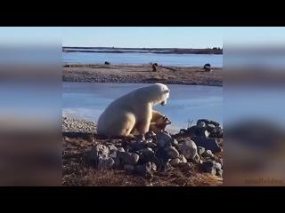 Животные тоже умеют дружить