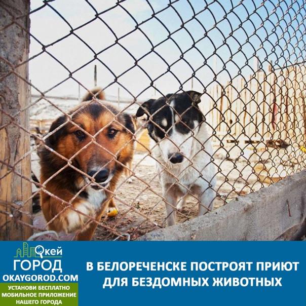 Вопросы жителей, связанные с безнадзорными животны...