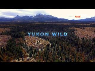 Тайны Арктики - Дикий Юкон | 2 сезон: 2 серия из 3 | 2017 | HD 1080