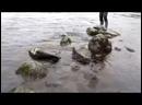 Рыбалка в Карелии. Кумжа на спиннинг
