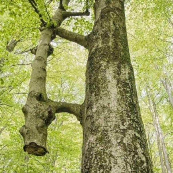 Это не просто дерево...