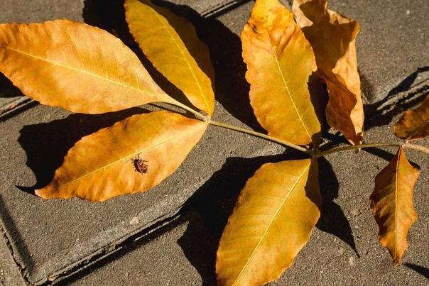 А по утрам волшебно очень Кружатся листья во дворе...