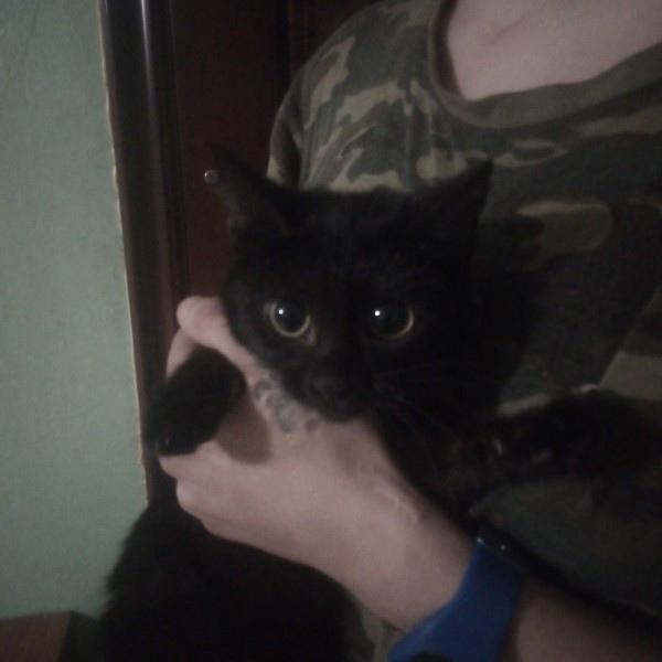 Найден котенок, Чкалова 59Срочно ищу старых или но...