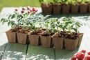 📢Уважаемые садоводы!📢 🌿Объявляем сезон рассады открытым!🌿 🌱🍅В продаже рассада томатов более 80 сорто