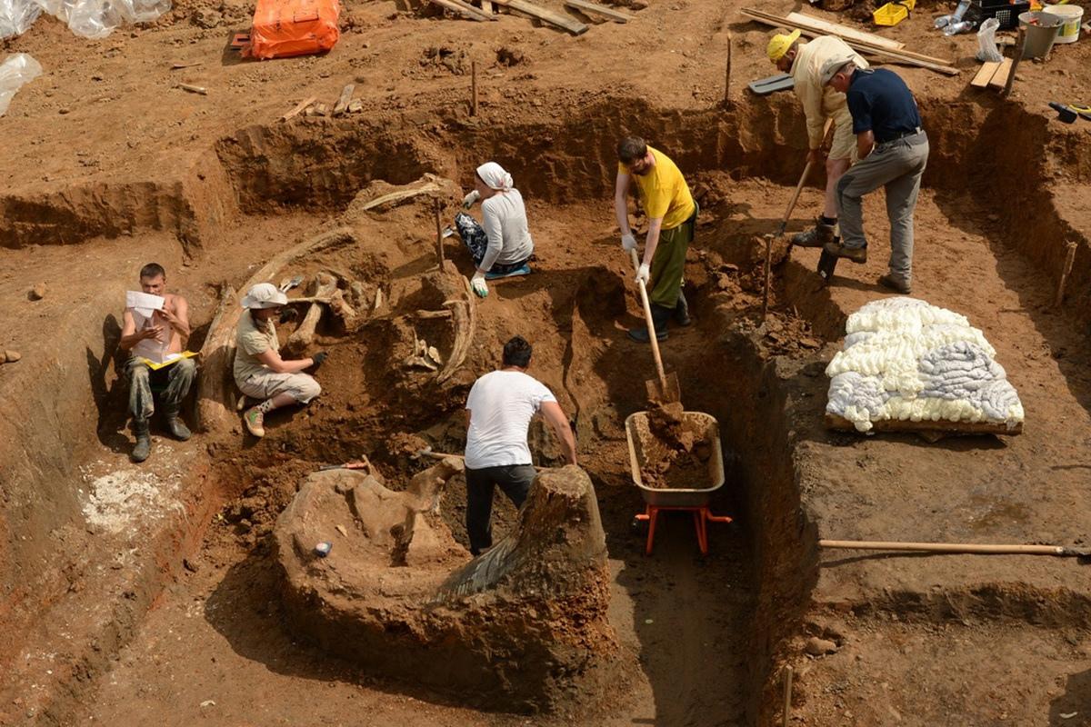 Раскопки трогонтериевого слона