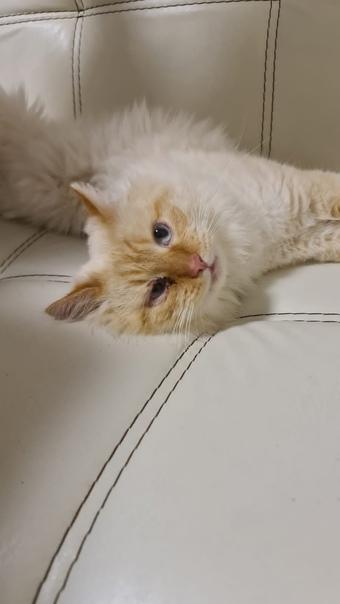 Срочно ищет новый дом молодой котик, был найден в ...