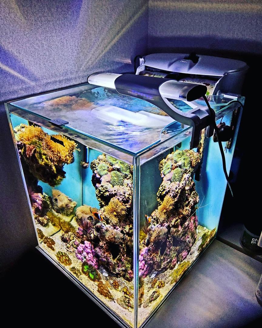 3 Алексей Чучко — Обзор аквариумного набора AQUAEL NANOREEF DUO, изображение №5
