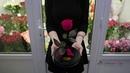 Роза в колбе размер стандарт Купить в Минске с доставкой