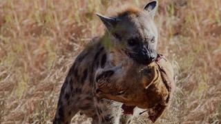 The Most Classic Battles in Wild Animals - Wild Animals Fight 2020