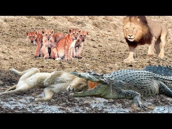 Chờ Đồng Đội vào bờ Dòng Sông Quá Siết Một phen hoảng hồn Vua sư tử Ông vua Có nhiều răng khỏe nhất