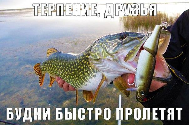 доброе утро рыболовы картинки женщина